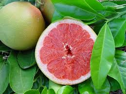 Pomelo vert mûr
