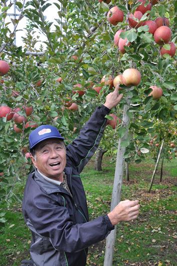 grosses pommes japonaises