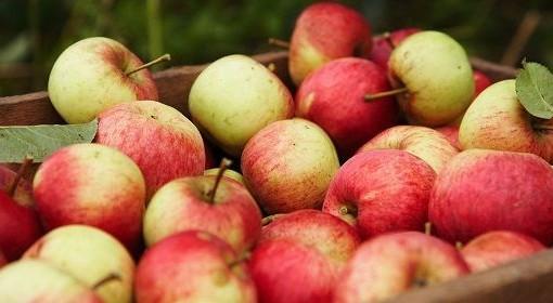 Pommes de saison